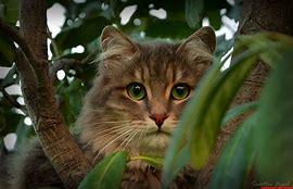 stray cats2
